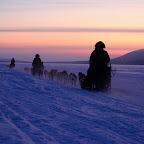 husky sledging.jpg