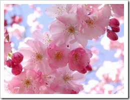 primavera_flor
