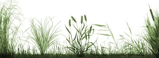 Grassland Photoshop Brushes