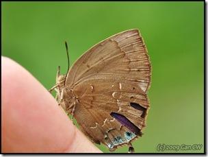 Surendra vivarna amisena-MYFHAdv_20090329_0679-480