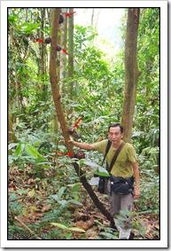 Rafflesia cantleyi-MyGopeng_20090628_2812-640