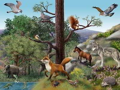 ecosistema -abiotico