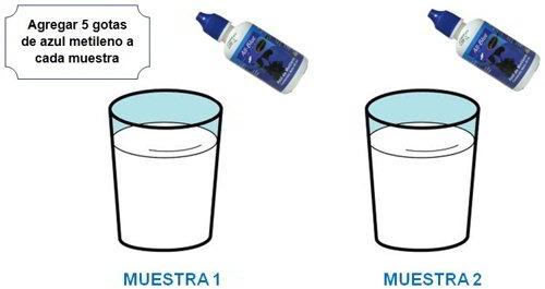 bacterias en la leche