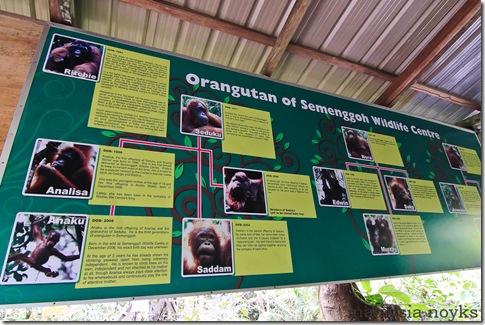 Semengoh Orangutan Rehabilitation Center 14