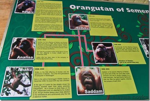 Semengoh Orangutan Rehabilitation Center 21