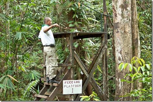 Semengoh Orangutan Rehabilitation Center 35
