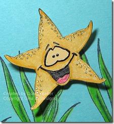 star close up