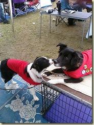 dogs ren fest