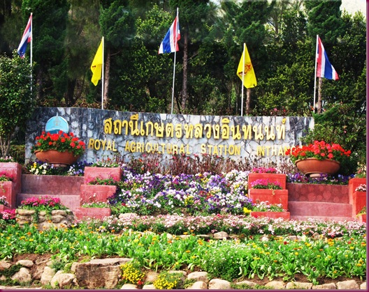 royal agricultural station inthanon