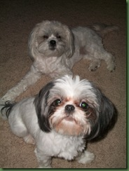 Stella & Sofie
