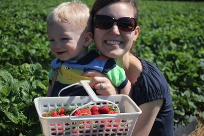 Strawberry Picking 20