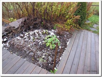 Nov 2010 , etter første frost