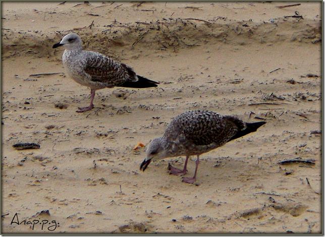 Noviembre 2009 playa 0566
