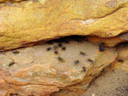 Comment sont les fourmis pot de miel yahoo questions r ponses - Comment eradiquer les fourmis ...