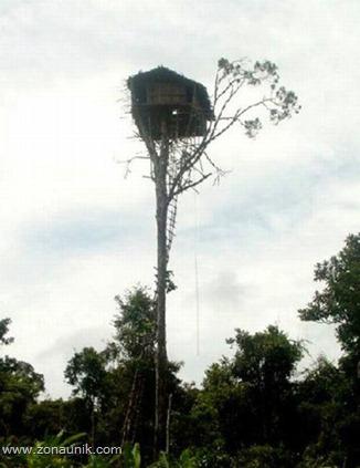 Rumah pohon (5)