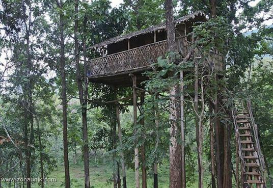 Rumah pohon (7)