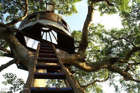 Rumah pohon (14)