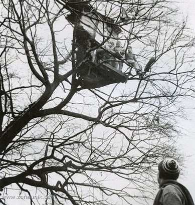 Rumah pohon (17)