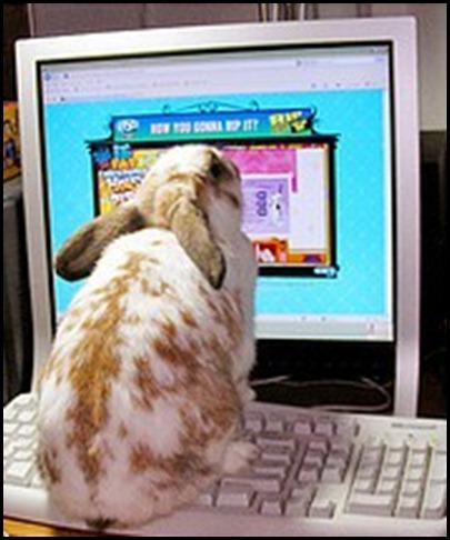 bunny (240x238)