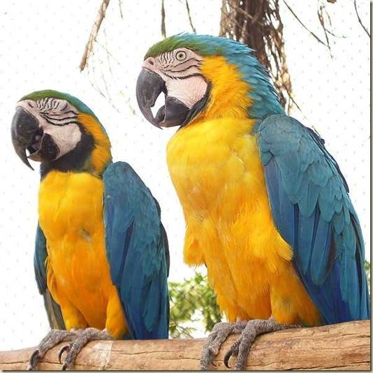 Animal que representa o Brasil 140 x140