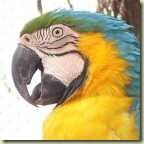 Animal que representa o Brasil cores 140 x140