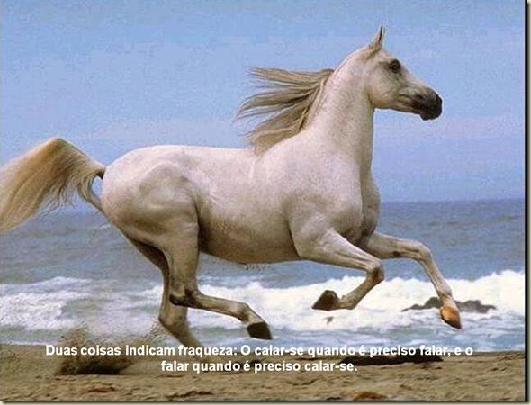 Cavalos 05