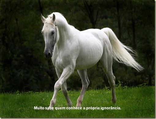 Cavalos 07