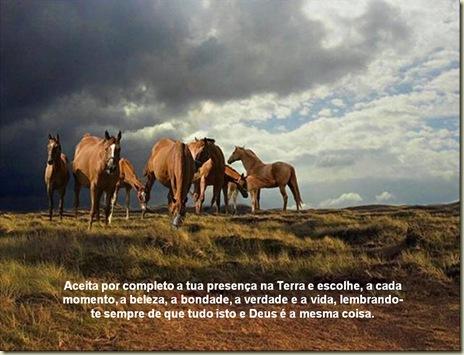 Cavalos 11