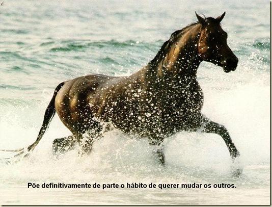 Cavalos 15