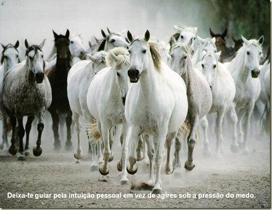 Cavalos 18
