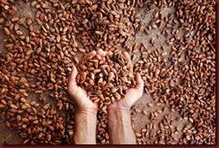 ca 16 sementes-de-cacau-secando