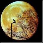 Mundo animal lua 140x140