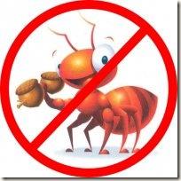 Formigas na cozinha 04