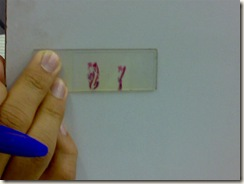 histology slide view (5)