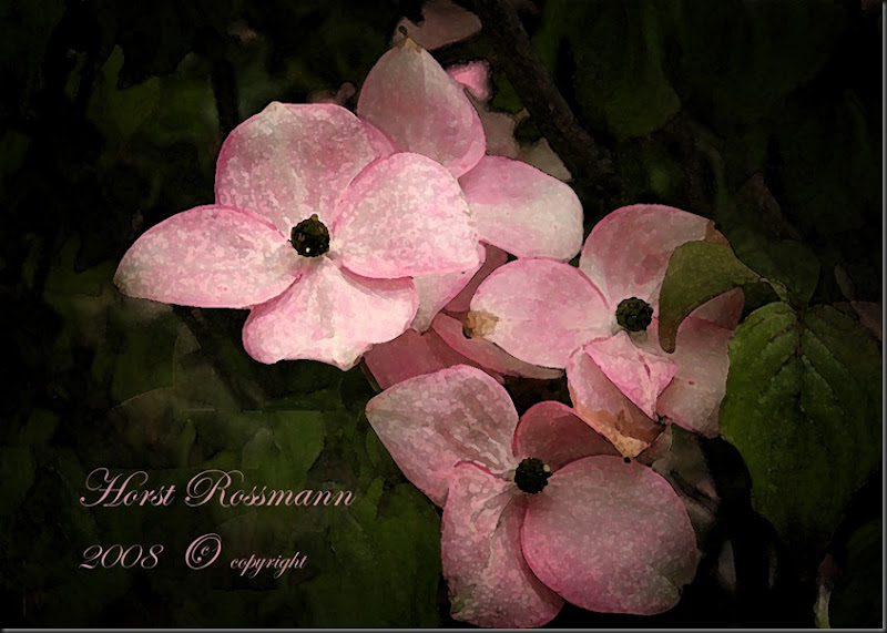 lillies garden dogwood
