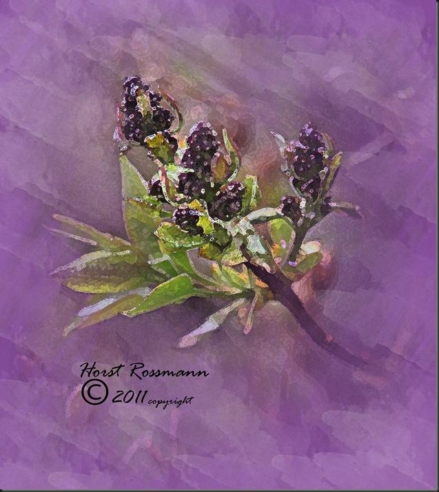 Spring Lilac 3