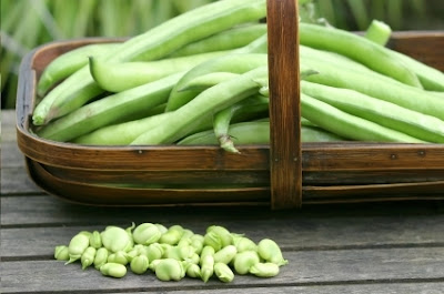 Gourmet Diet Delivery broad beans