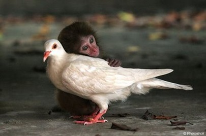 Monyet dan merpati