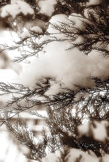 snow5BB