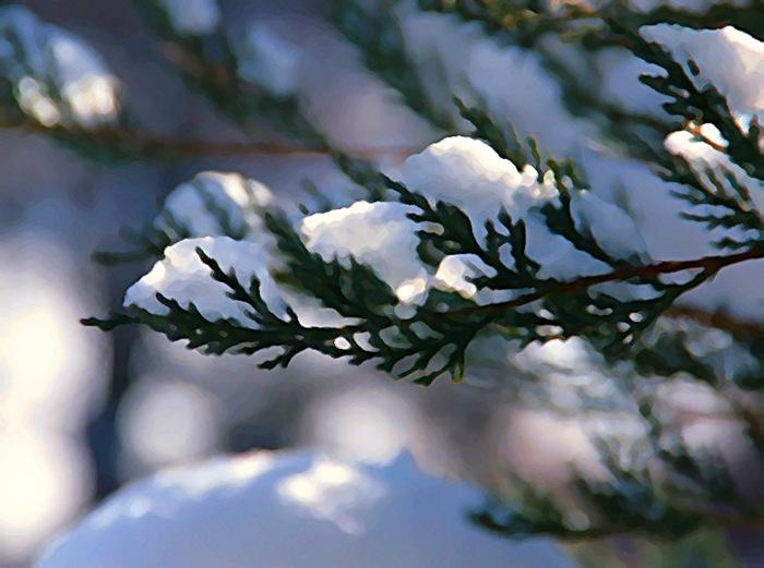 snow1b