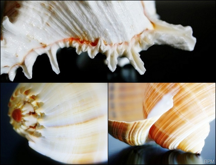 shellsmosaic2
