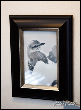 Black-and-white-framed-bird