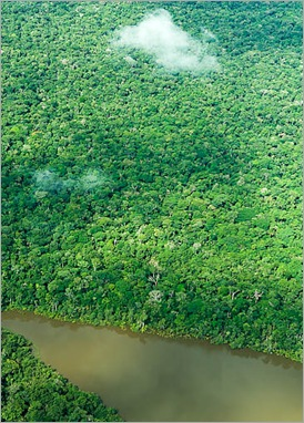 Aerial view of pristine Amazon Rainforest or jungle, Brazil