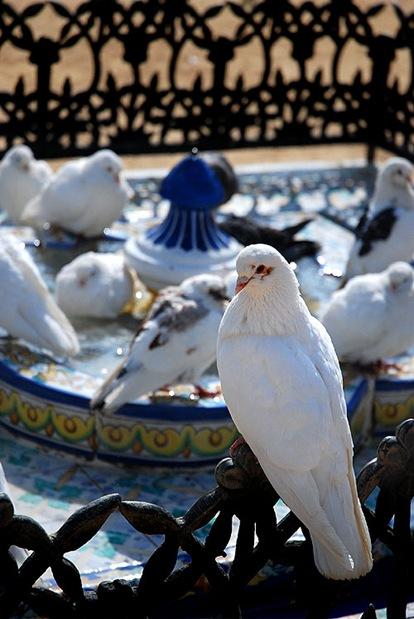 piccioni3