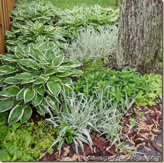 Cathy Kimber's perennial shade beds
