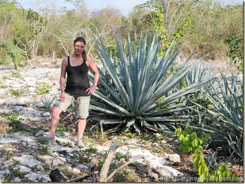 Giant Agave and Shawna