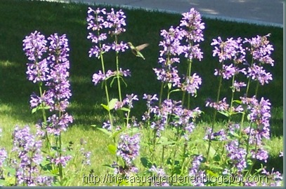Xeriscaping concepts