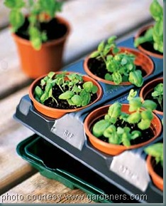Gardeners Supply Seed Starting System
