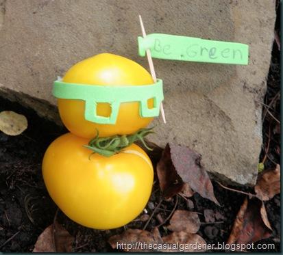 bizarre tomato from Shawna's garden
