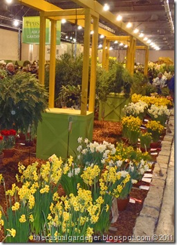 daffodil judging at the Philly garden show 2011